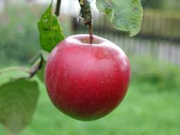 low glycemic index fruits for diabetic patients - Apple