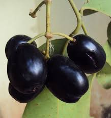 low glycemic index fruits for diabetic patients - Java Plum